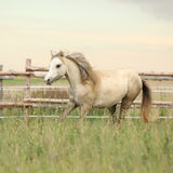Beautiful pony moving on pasturage Royalty Free Stock Photography