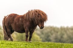 A beautiful pony standing on grass stock photography