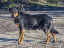 Beautiful pooch posing for the camera royalty free stock photo