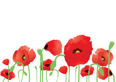Beautiful poppies Royalty Free Stock Photo