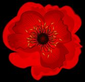 Beautiful poppy Stock Photo