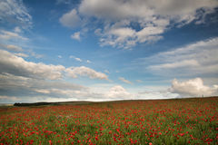 Beautiful poppy field landscape during sunset with dramatic sky Royalty Free Stock Photo