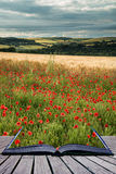 Beautiful poppy field landscape during sunset with dramatic sky Stock Photo