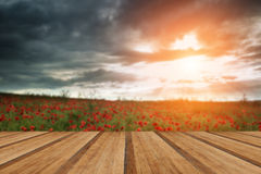 Beautiful poppy field landscape during sunset with dramatic sky Stock Images