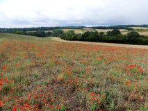 Beautiful poppy field overlooking the Chess Valley in the Chiltern Hills royalty free stock photos