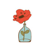 Beautiful poppy flower in glass bottle Stock Images