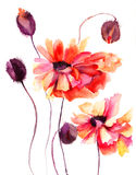 Beautiful Poppy flowers. Watercolor painting Royalty Free Stock Photos