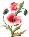 Beautiful Poppy flowers. Watercolor painting Stock Photography