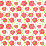 Beautiful Poppy Flowers set, Colorful Vector seamless pattern. Poppy Flowers set, Colorful Vector seamless pattern Royalty Free Stock Images