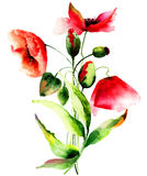 Beautiful Poppy flowers. Watercolor painting Stock Photo