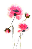 Beautiful poppy flowers. Watercolor painting of beautiful poppy flower on paper for wall decorate or home decortae Royalty Free Stock Photography