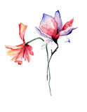 Beautiful Poppy and Magnolia flowers. Watercolor illustration Stock Photo