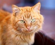 Beautiful portrait of a cat Stock Image