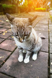 Beautiful portrait of cat sitting on concrete ground Royalty Free Stock Image
