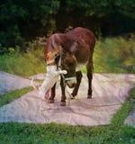 Beautiful portrait of a donkey Royalty Free Stock Photos
