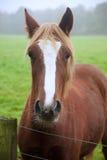Beautiful portrait of horse in foggy field Stock Photo
