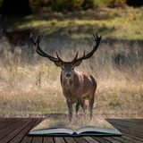Beautiful portrait of red deer stag Cervus Elaphus in colorful Autumn Fall woodland landscape coming out of pages in magical story. Stunning portrait of red deer royalty free stock image