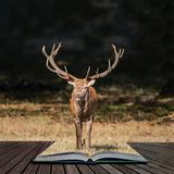 Beautiful portrait of red deer stag Cervus Elaphus in colorful Autumn Fall woodland landscape coming out of pages in magical story. Stunning portrait of red deer royalty free stock photo