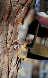 Beautiful portrait of a squirrel Stock Photo