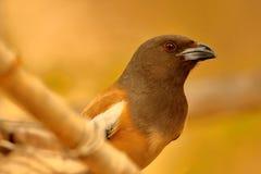 P0rtrait of tree pie birds stock images
