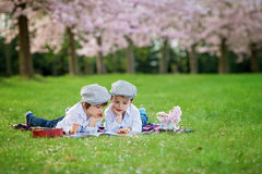 Beautiful portrait of two adorable caucasian boys, reading a boo. K in a cherry tree blooming garden, spring afternoon, kids lying on the grass on a blanket Royalty Free Stock Image