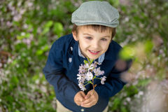 Beautiful portrait of a young preschool child holding flower. Beautiful portrait of a young preschool child in a cherry blossom garden, holding flower, shot from Royalty Free Stock Photo