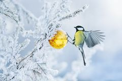 Free Beautiful Postcard With Bird Tit Flying Have Glass Golden Festive Globe Hanging On Branch Christmas Tree Winter In Park Stock Image - 160914711