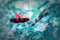 Beautiful postman butterfly selective soft focus nature image. Beautiful postman butterfly Heliconius melpomene invertebrate nature image. Pretty insect with royalty free stock photography