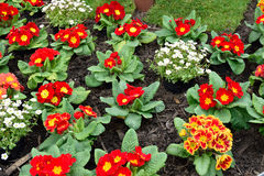 Beautiful pot flowers closeup in spring Royalty Free Stock Photos