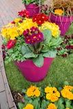 beautiful pot flowers closeup in spring Stock Image