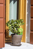 Beautiful pot  flowers on a windowsill Royalty Free Stock Photo