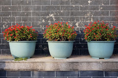 Beautiful potted flowers. Under corner Stock Image