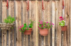 Beautiful potted flowers hanging on wooden wall stock images