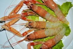 Beautiful prawns and salad background stock images