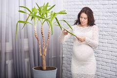Beautiful pregnant mother in white dress with dark hair, posing at home in modern apartment against brick wall, standing near big royalty free stock photo