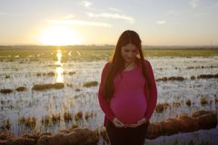 Beautiful pregnant pregnant woman in rice fields. Spain stock photography