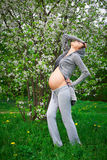 Beautiful pregnant woman Stock Photography