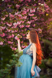 Beautiful pregnant woman in blooming garden Royalty Free Stock Image
