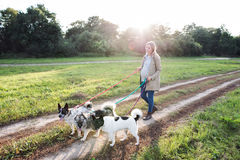 Beautiful pregnant woman with dogs in green sunny nature Stock Photography