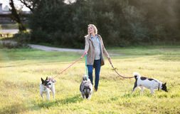 Beautiful pregnant woman with dogs in green sunny nature Royalty Free Stock Photos