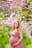 Beautiful pregnant woman in gently pink dress and touching belly is standing near the cherry blossom Royalty Free Stock Image