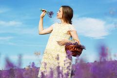 Beautiful pregnant woman in the lavender field Stock Photography