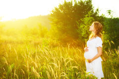 Beautiful pregnant woman in summer nature meadow in sunset royalty free stock image