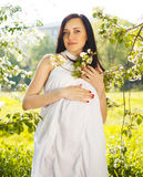 Beautiful pregnant woman in white dress in the flowering spring Royalty Free Stock Images