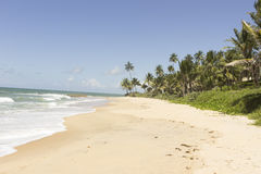 The beautiful and preserved Coqueirinhos beach Royalty Free Stock Image