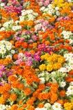 Beautiful pretty  flower Stock Photo