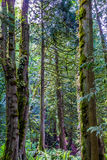 A Beautiful Primeval Rain Forest Royalty Free Stock Images