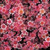 Beautiful print with blossoming dark and light pink sakura flowers. Deep 3d effect on black vector illustration stock illustration