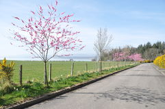 A beautiful private road in spring time. stock image