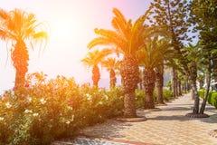 Beautiful promenade with palm trees in Marmaris. Stock Photos
